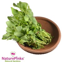 Chukkakura Leaf Organic 2 bunches