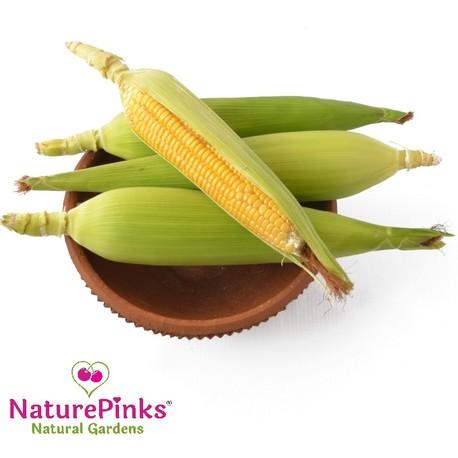 Corn Organic 4pc
