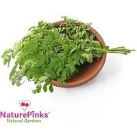 Drumstick Leaf Organic