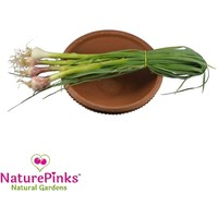 Green Garlic Organic 4 pc