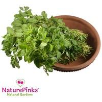 Koyya Thotakura Leaf Organic 4 bunches