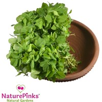 Methi Leaf Organic 2 bunches