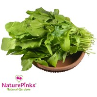 Palak Leaf Organic 2 bunches
