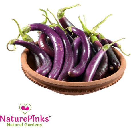 Brinjal Long Purple Organic 500g